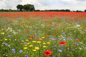 Eagle Moor, Lincolnshire