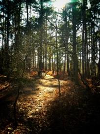 Deepcut Walks - Paul Deach