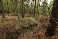 1 Trenches Walk Deepcut - Alan Meeks (22)