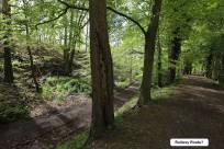 1 Trenches Walk Deepcut - Alan Meeks (7)