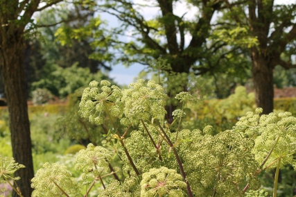 Loseley Park - Claire Funnell (7)