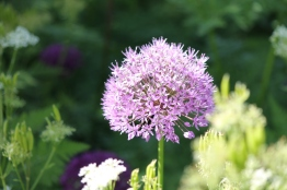 Loseley Park - Claire Funnell (8)