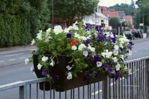 Freedom of thee Borough Parade - RMA - Windlesham and Camberley Camera Club (32)