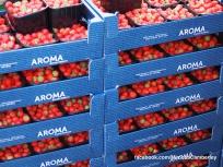 Camberley Food and Artisan Market - Mimosa - Paul Deach - 23