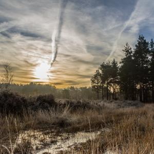 Brentmoor Heath.