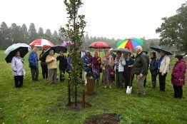 WI Tree Planting - Alan Meeks 1