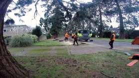 Wellingtonia - Yockley Close Feb 2016 13