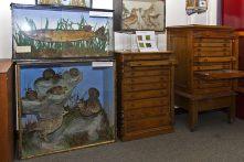 Natural History Society March 2016 4