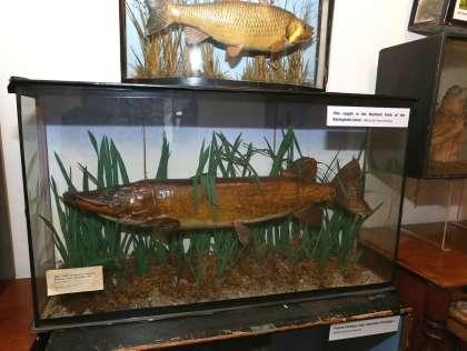 Natural History Society March 2016 5
